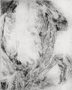 Blesshuhn (Bauch), 2004