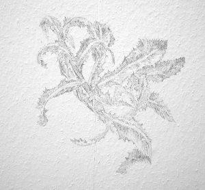 Distel 2, 2008, Wandzeichnung