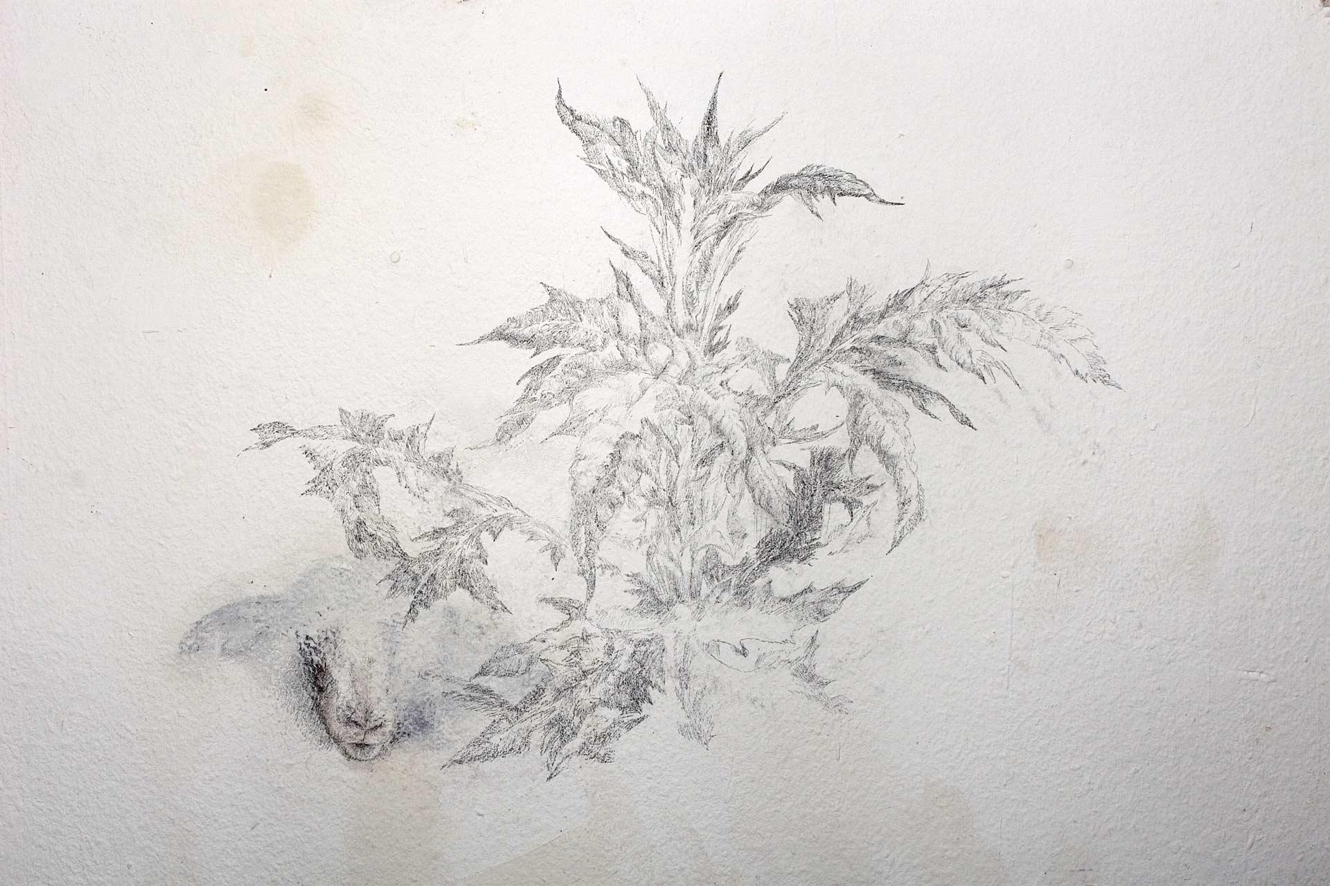 Distel, 2008, Wandzeichnung