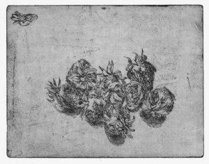 Erdbeeren, Strichätzung, 2007