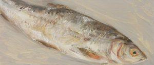 Fisch #7235, 2012