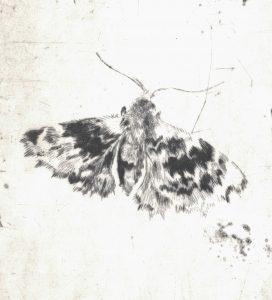 Motiv 1 (Detail), 2017, Kaltnadelradierung, 14 x 10 cm