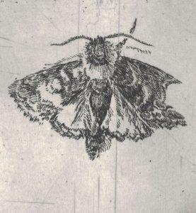 Motiv 2 (Detail), 2017, Strichätzung, ca. 6 x 9 cm