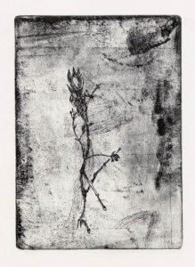 Ohne Titel, 2008, Strichätzung, 15,5 x 11,2 cm