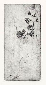 Ohne Titel, 2008, Strichätzung, 15,5 x 7,6 cm