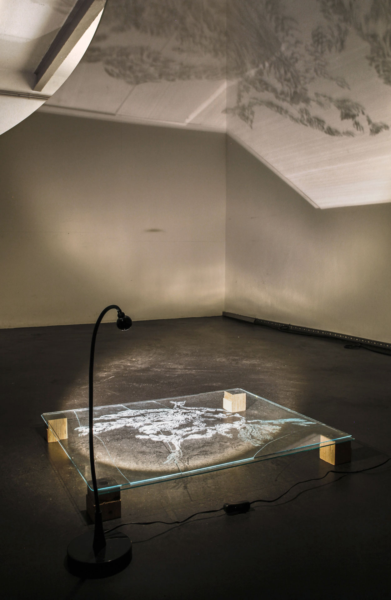Pfau, 2015, Projektion, Atelier Rödelheim