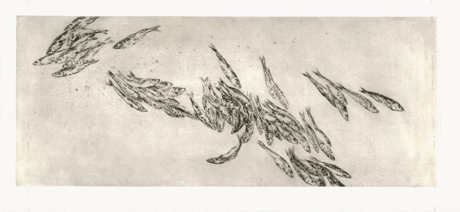 Sardinen (großer Schwarm), 2012, Kaltnadelradierung, 40 x 100 cm