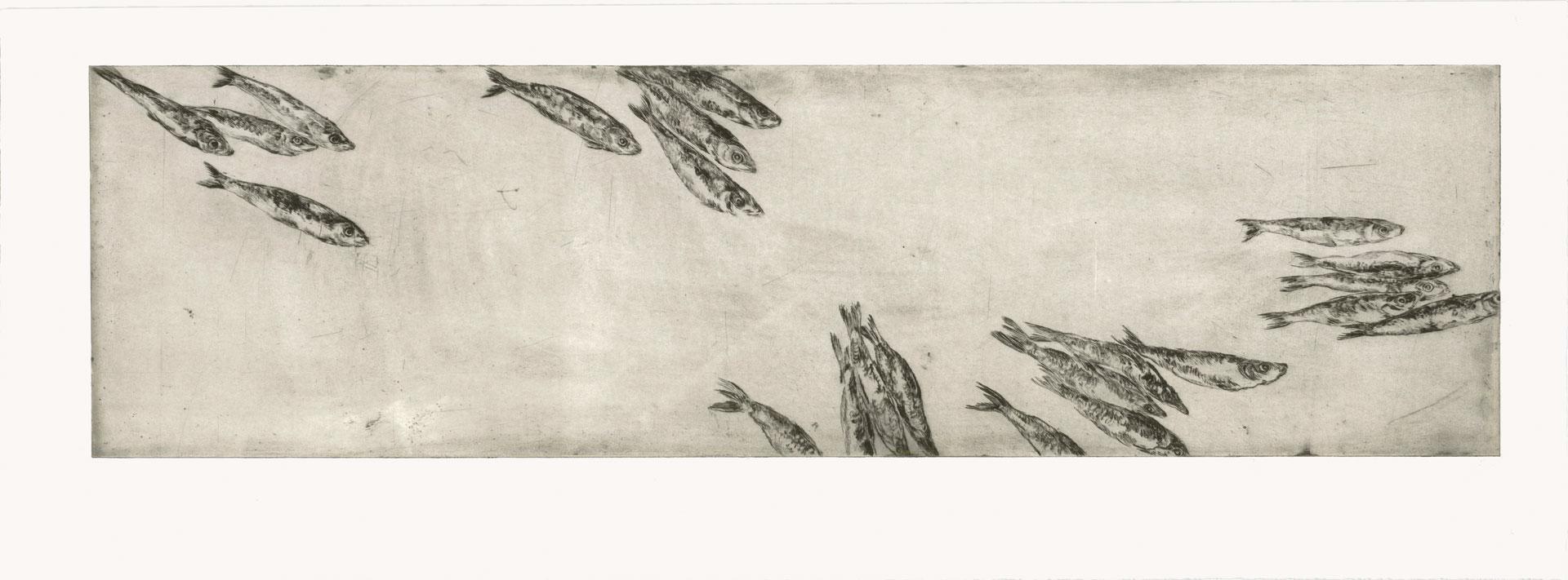 Sardinen, 2012, Kaltnadelradierung, 30 x 100 cm