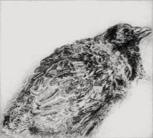 Schwarzer Vogel, 2004