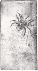 Spinne, 2006
