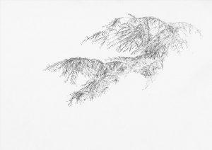 Zeder, 2000, Bleistift auf Papier, 20,5 cm x 29 cm