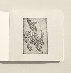 """Seite """"Schwertlilie"""", aus dem Künstlerbuch """"Herbar"""", 2007"""